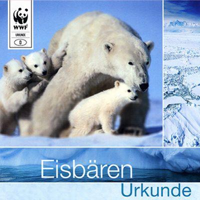 Eisbären Zertifikat